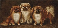 three pekingese by lilian cheviot