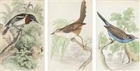 ptaki afryki zachodniej (24 works) by william home lizars