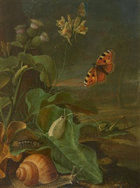 still life with plants and insects by johann adalbert angermayer