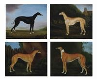 favourite greyhounds: sam slick (+ 3 others; 4 works) by gordon gyll