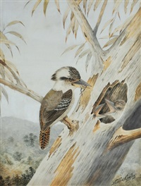 kookaburra feeding frog to young by neville henry peniston cayley