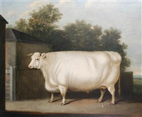 a prize white bull standing beside a farmyard gate by william henry davis