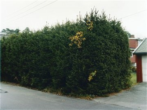 screens and hedges 7 by marte aas