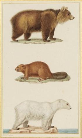 ours brun castor et ours polaire by jean gabriel prêtre