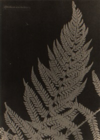 aspidium aculiatum by anna atkins