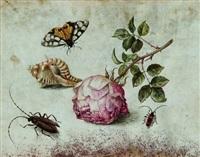 una rosa, una conchiglia, una farfalla e due insetti by margarethe de heer