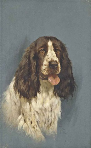a springer spaniel by arthur wardle