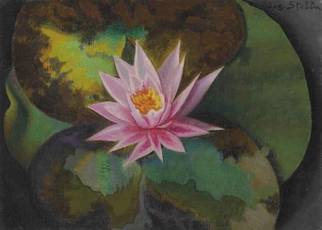 pink water lily by joseph stella