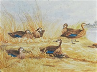 6 pacific black ducks in river landscape by neville william cayley