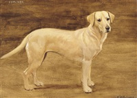 poacher, the golden labrador by frances mabel hollams