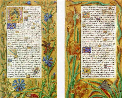 initial d with a dragonfly and margins with cornflowers by french school tours 16