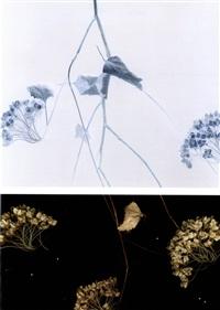 vilburnum (diptych) by marjukka vainio