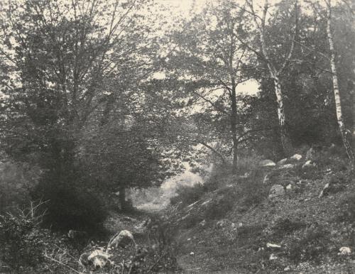 au bas du point de vue du champ forêt de fontainebleau by eugène cuvelier