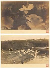 荷香清远 池畔鹅群 (两幅) 银盐相纸 (lotus/geese (a set of two)) (2 works) by liu bannong