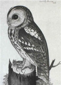 tawny owl by christopher (rev.) atkinson