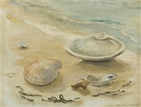 shell still life by frances avery