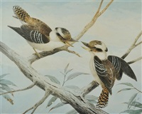 two kookaburras by neville henry peniston cayley