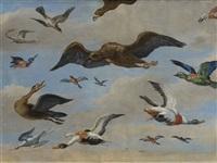 étude d'oiseaux sur fond de ciel by jan van kessel