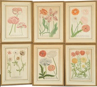 hand-colored botanical engravings from phytanthoza iconographia (set of 6) by johann wilhelm weinmann
