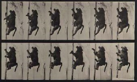 animal locomotion pl 727 lion et lionne pl 749 babouin and pl 750 paresseux 3 works by eadweard muybridge