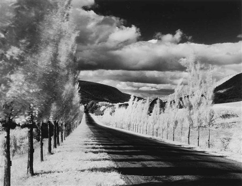road and poplar trees, in the vicinity of naples and dansville, new york by minor white