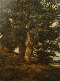 oak in bradgate park by arthur hill