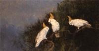 cockatoos in a tree by adelina katona madarasz