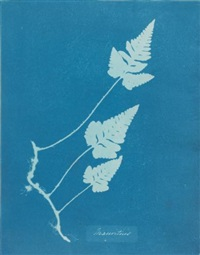 mauritius by anna atkins