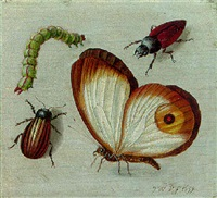 a butterfly, two beetles and a caterpillar by jacob woutersz vosmaer