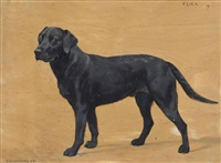 flick, the black labrador by frances mabel hollams