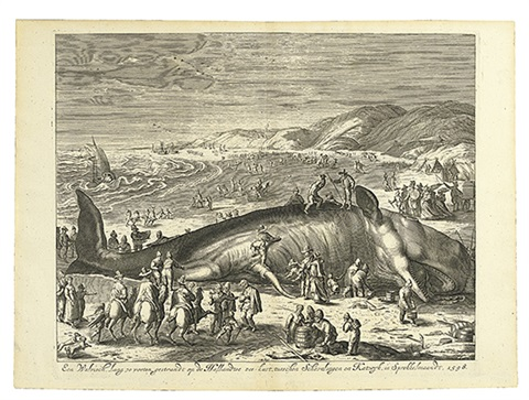 a beached whale between scheveningen and katwijk by gilliam van der gouwen