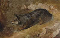 a rabbiting terrier by thomas faed