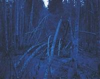 blå skog #43 by morten andersen