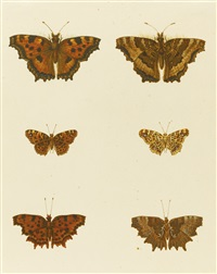 butterflies and caterpillars (5 works) by anonymous-european (19)