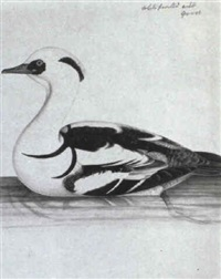 a smew by christopher (rev.) atkinson