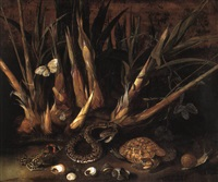 sugar cane and a species of passiflora with a pit viper and other animals by albert van der eeckhout