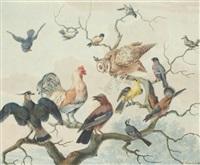 chouette et divers oiseaux en concert sur un arbre by jabes heenck