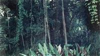 koloa, kauai by axel hütte
