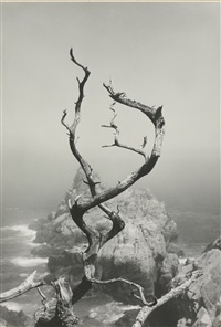twisted tree by minor white
