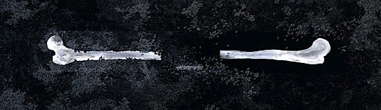 os dans paysage by sara abbasian