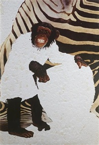chimp bongos (all evidence of man removed) by angus fairhurst