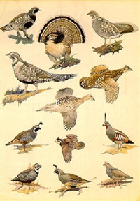 quail and grouse by francis lee jaques