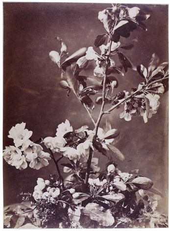 nature morte aux fleurs by charles aubry