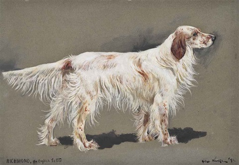 richmond an english setter by arthur wardle