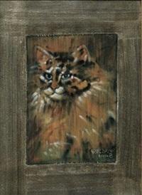 长毛猫 by liu chiwei