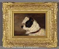 norfolk black and white terrier and white bull terrier (2 works) by edwin (of bath) loder