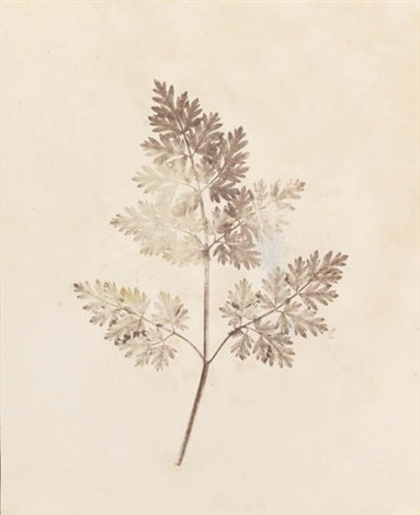 pencil of nature (various sizes; 13 works) by william henry fox talbot