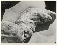 log (driftwood on beach) by imogen cunningham