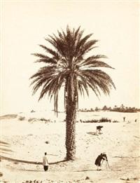 un palmier à el-oued-souf (algérie) by piboul (capitaine)