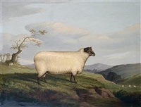 a black faced sheep in landscape by h. j. quinton